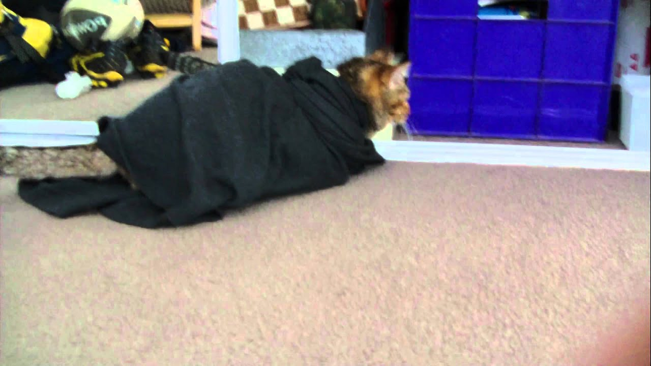 Cat Straight Jacket - YouTube