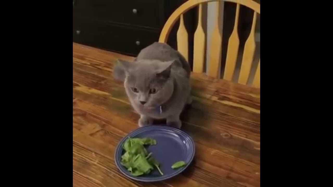 Не самый умный кот видео