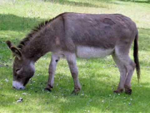 kako napraviti svoj vlastiti magarac