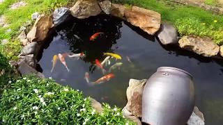 Hồ cá koi đẹp tiểu cảnh sân vườn - Hồ cá koi mini ngoài trời