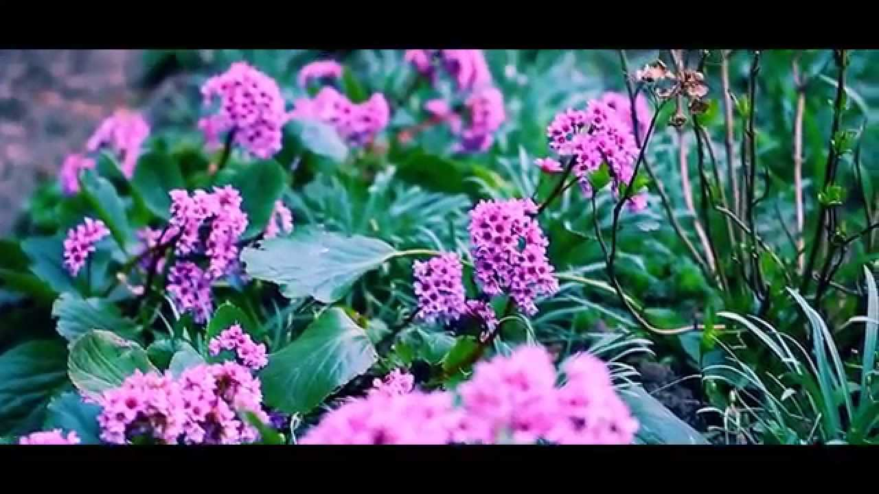 Purplepink Flower Borders Youtube