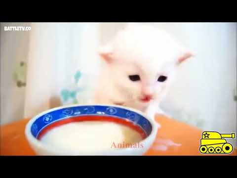 Watch kittens singing, kittens meow, kittens crying, funny kittens