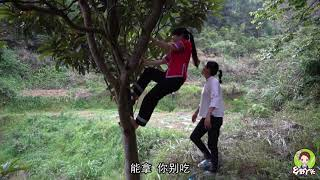野枇杷甜得过葡萄?秋子大嫂爬上枝头,摘下5斤把续梦给乐坏了