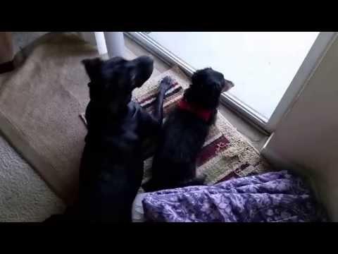 DOGS GO CRAZY WHEN KIDS COME HOME