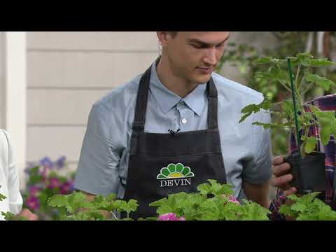 Roberta's 6-Piece Scented Geranium Collection on QVC