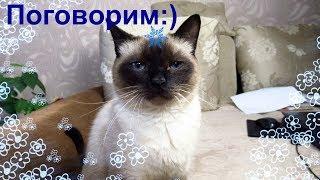 Беседую с котом:)