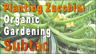 Planting Zucchini | Organic Gardening