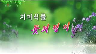 [사회문화상식]   지피식물 꽃패랭이