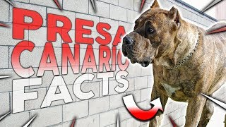 Top 10 PRESA CANARIO Facts!