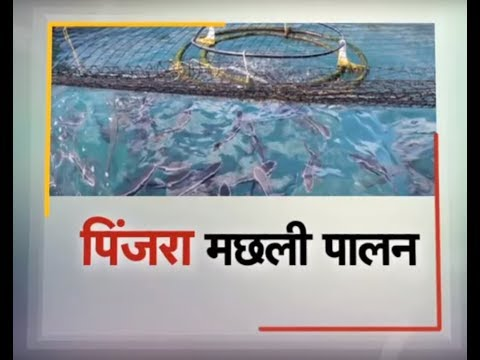 Krishi Darshan - Cage Fish Farming