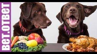 Вегетарианское кормление собак и кошек. Вет Ответ.