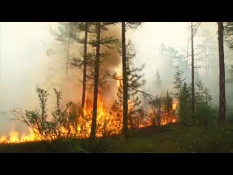 Лесные пожары не тушат из-за экономии средств
