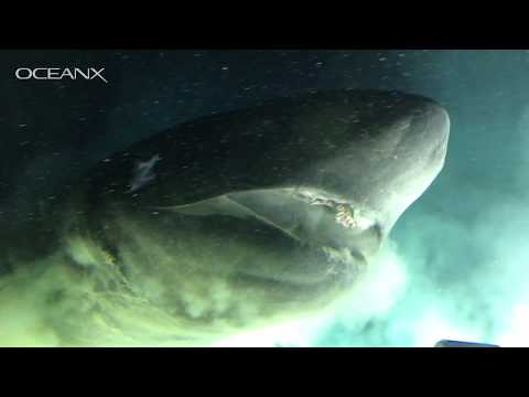 Massive Deep-Sea Shark Checking Out Our Submarine
