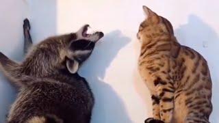 ПРИКОЛЬНЫЕ ЖИВОТНЫЕ Смешные видео с животными