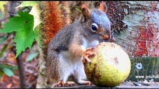 I Love My Job!  - Life Lessons From a Squirrel