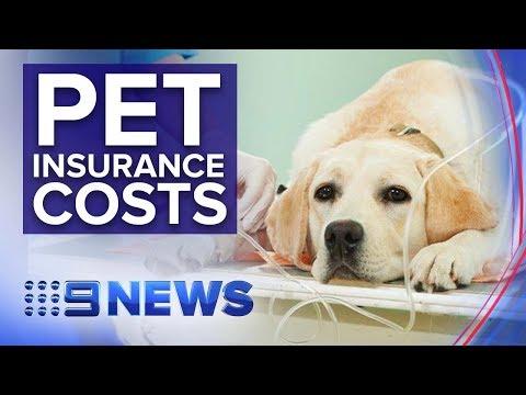 Australians Spend $500 Million On Insurance For Their Pets   Nine News Australia