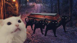 Astronomia - Coffin Dance Meme - Cat Cover #2