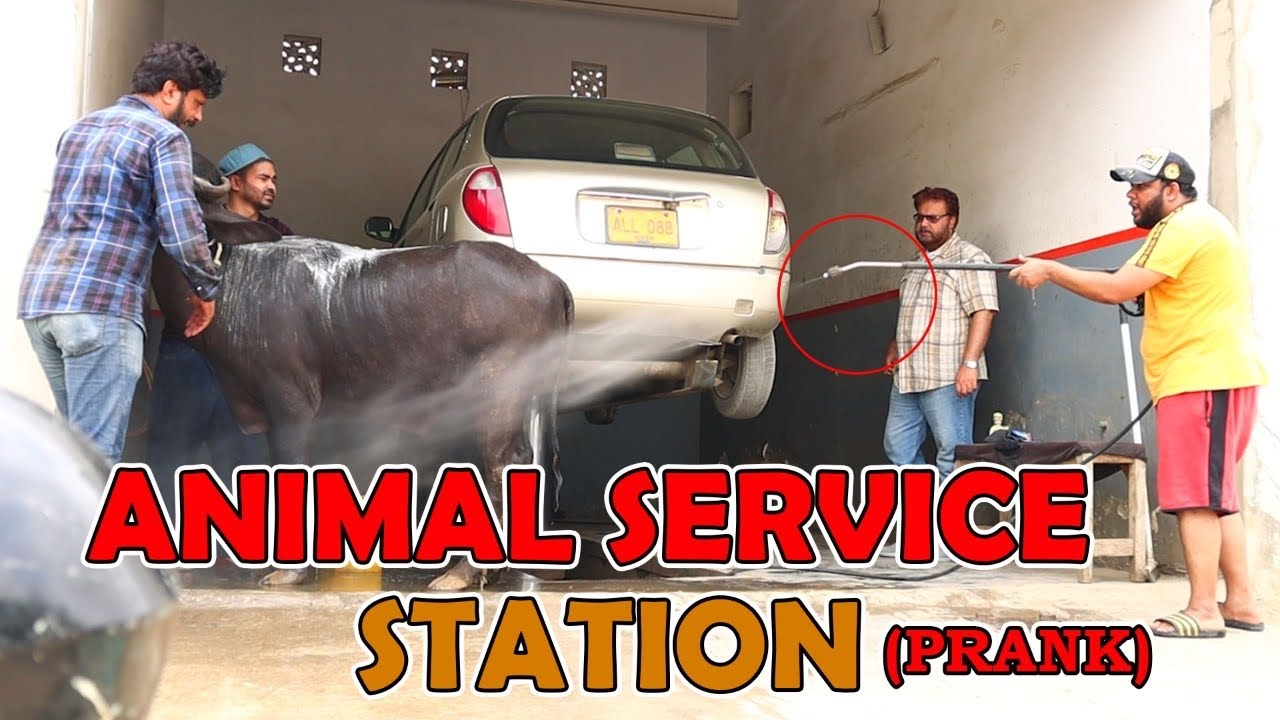Download   Animal Service Station   By Nadir Ali & Team in   P4 Pakao   2021