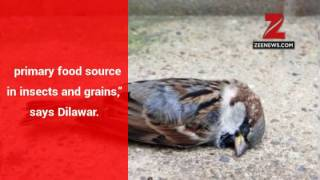 World Sparrow Day: 'Mindless urbanisation', lack of emotional connect has threatened ...