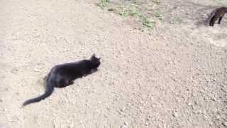 Кот, который хотел обольстить кошку
