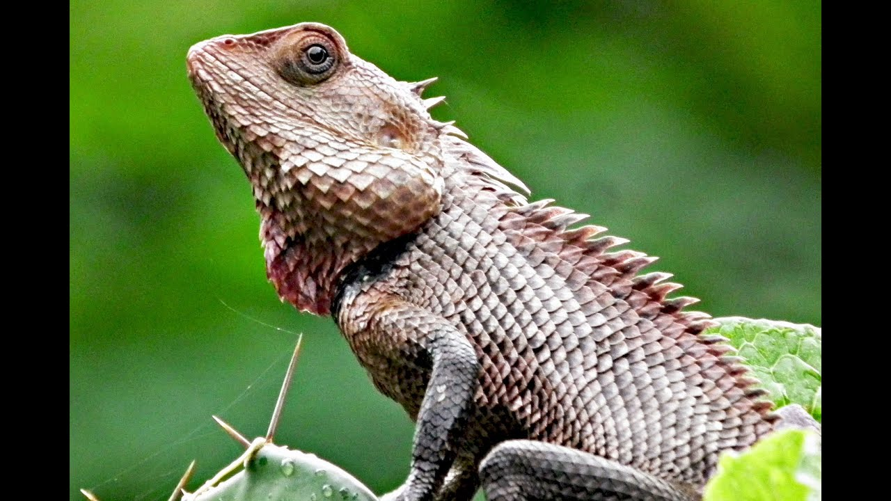 Magnificent Garden Lizard Contemporary - Landscaping Ideas for ...