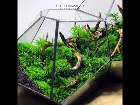 Sophisticated Preserved Moss Geometric Terrarium, Terragon - X by TerraLiving