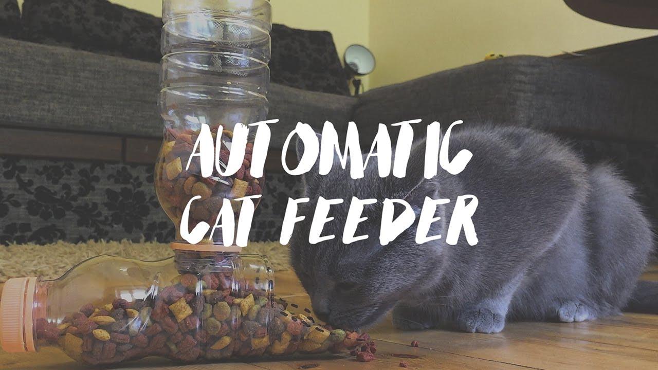 Cat Feeder Diy Automatic Food Dispenser 😻 Youtube