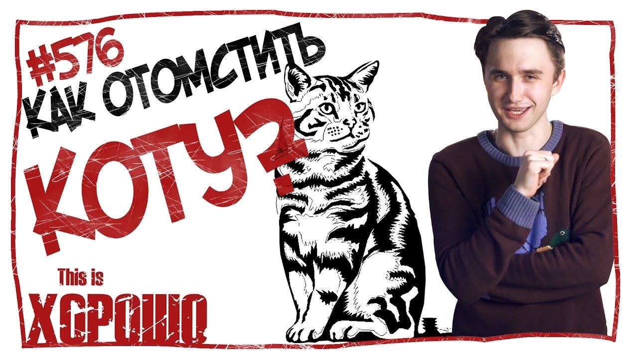 This is Хорошо-Как отомстить коту? #576