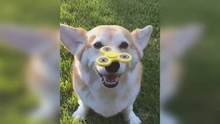 Funny Animals Videos 2019 - Best Vines 2019 - Funnest Videos Try Not TO Laugh 2019