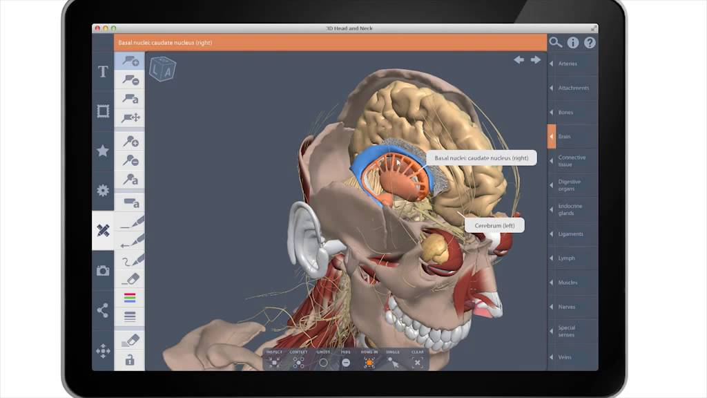 Complete Human Anatomy Primal 3D Interactive Series Download