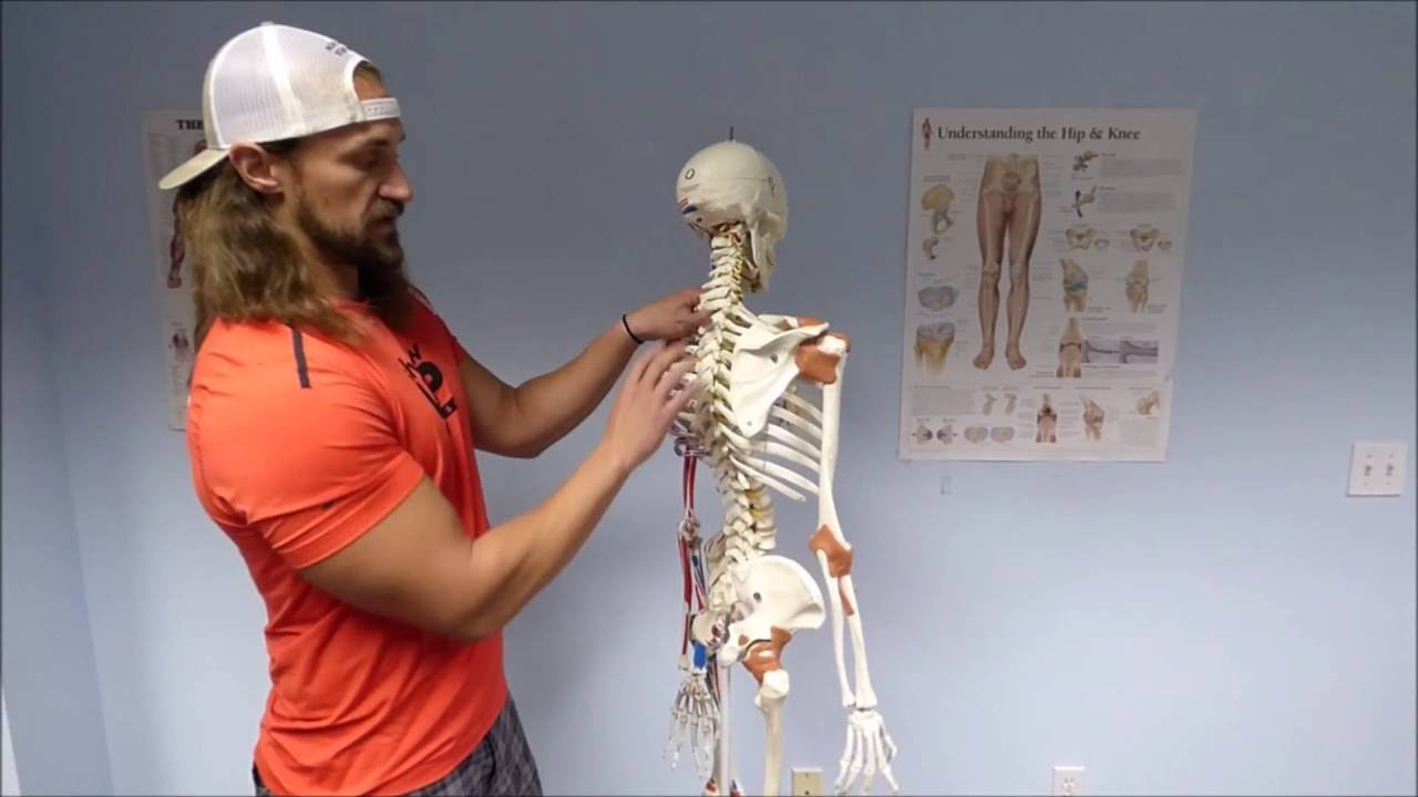 Show Up Fitness: Skeletal Anatomy For Personal Trainers - YouTube