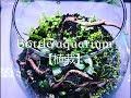 ボトルアクア 立ち上げ 植栽 の動画、YouTube動画。