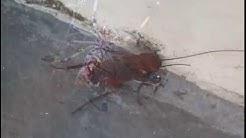 Pest Control Delaware | (302) 248-8042 | exterminators, termite, ants, bedbugs, rodents, mice