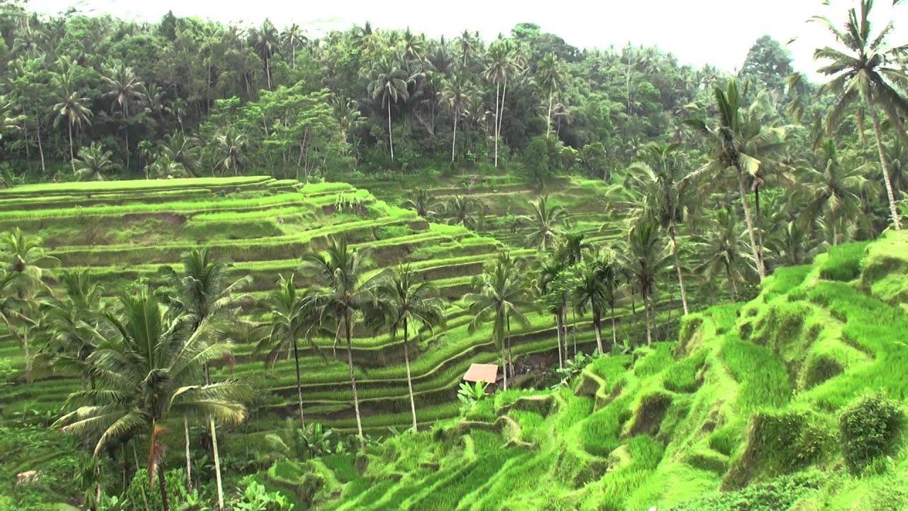 Tegalalang rice terrace bali youtube for Tegalalang rice terrace ubud