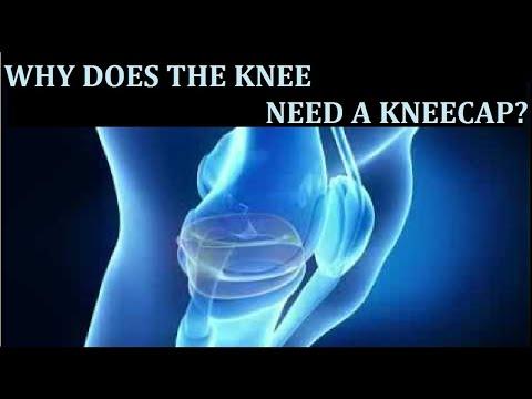 Роль коленной чашечки (patella) в кинематике колена.