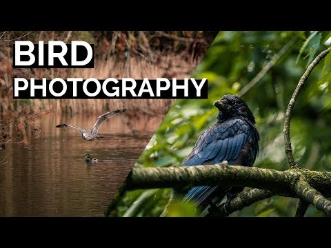 5 Tips for Bird Photography | Tutorial Tuesday thumbnail