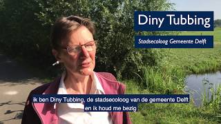 Bijzondere plekken in Delft: Vogeleiland Delftse Hout