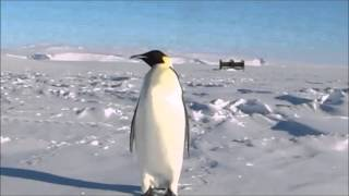 Holidays to Antarctica