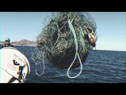 Sea Shepherd Teams with Stella McCartney on Ocean Plastic Awareness