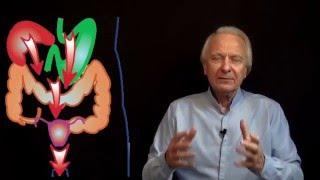 Vidéo : Cystite, infertilité, douleurs pelviennes, ptôse  :  soins naturels
