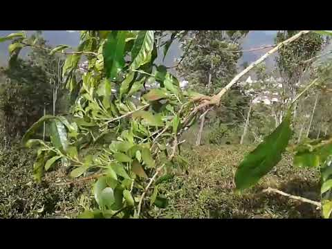 Easy to learn Parasitic plant in tamil
