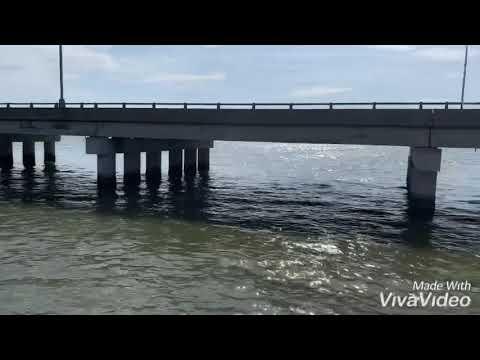 James River Pier Fish Check