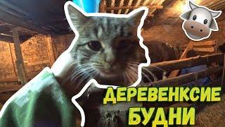 👉Немного новостей // Будни деревенские // Ужин