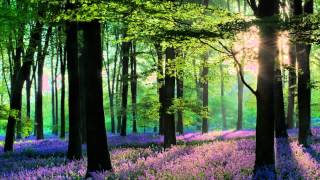 Relaxation sounds of nature