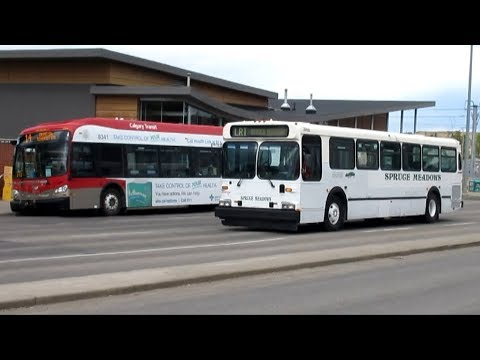 Buses In Calgary, AB (Volume Three)