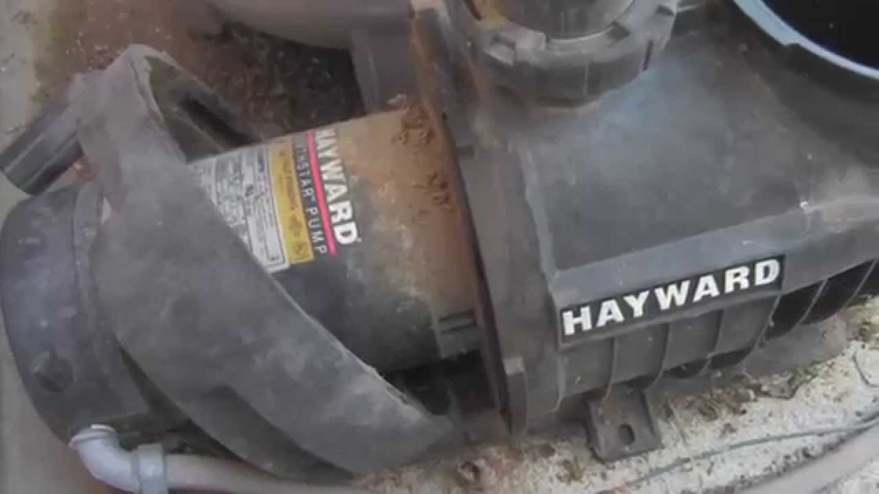 Hayward Northstar Pool Pump: Motor Removal and Impeller Inspection on