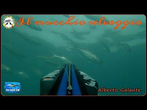 PESCASUBACQUEA:IL MUCCHIO SELVAGGIO 4,LA COPPIOLA...BY Alberto Galante