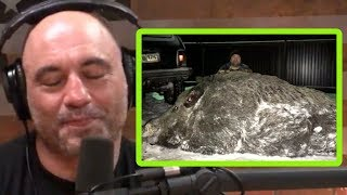 Joe Rogan Calls BS on Russian Giant Hog Photo