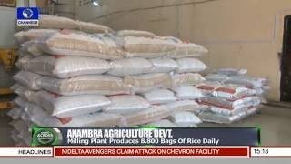 Governor Willie Obiano Inspects Rice Farms