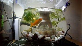金魚鉢レイアウト追加、アウトレット照明 thumbnail